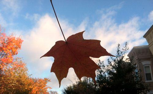 Georgetown leaf 11 3 13